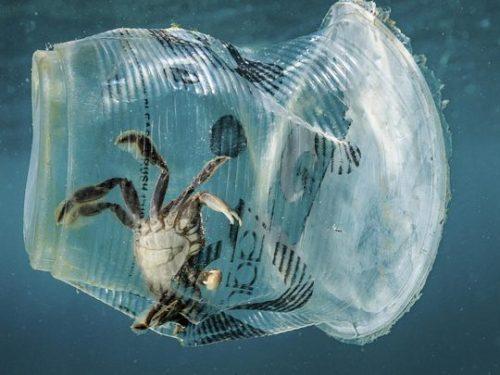 Stop a plastica e sigarette in spiaggia a Cagliari, soddisfazione del PRESIDIO